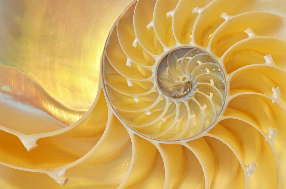 omer-nautilus
